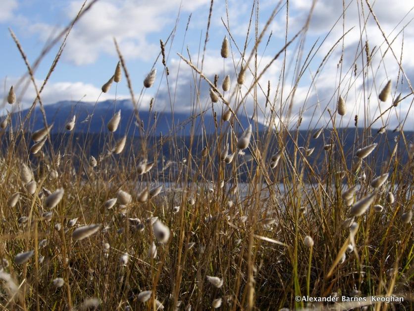 Crown Land (2015) Tasmania, Australia