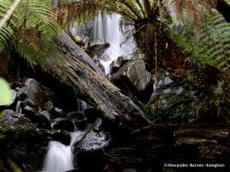 Cold Temperate Waterfall (2015) Tasmania, Australia