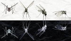 Mosquito Moon Landing Graphite and Digital Manipulation ©Alexander Barnes-Keoghan 2014