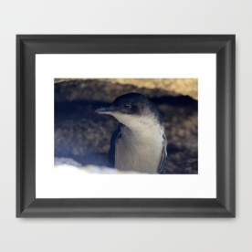 The Little Penguin Framed Art Print