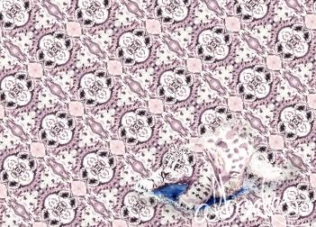 02-snowleopard-001